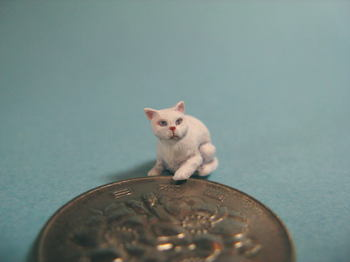 cat1-6.jpg