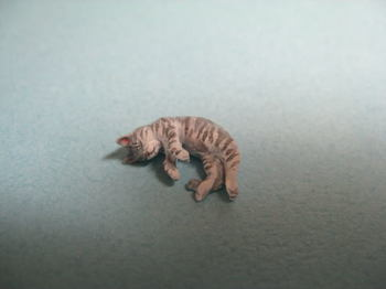 cat7-1.jpg